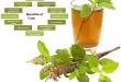 7 Best Benefits of Tulsi
