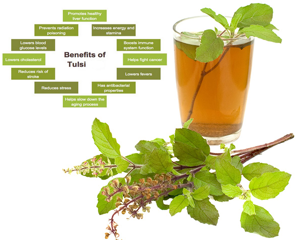Photo of 7 Best Benefits of Tulsi