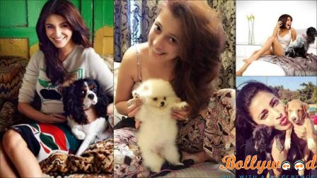 bollywood celebs and their pets