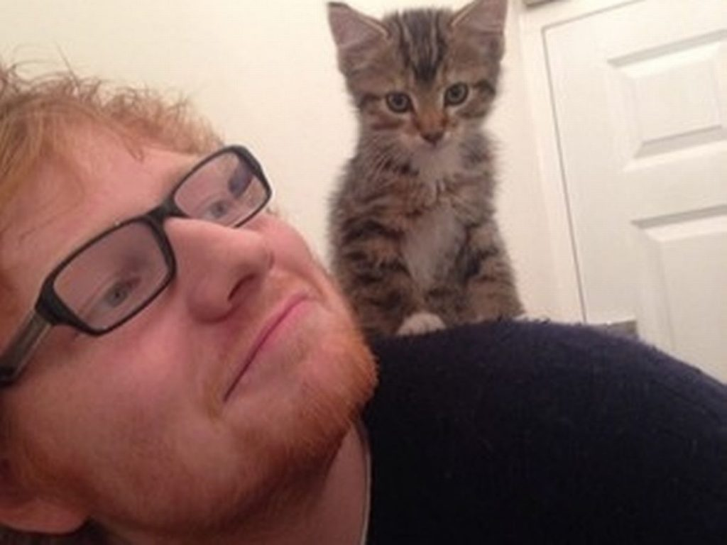 Photo of Ed Sheeran's cat killed in car accident Source