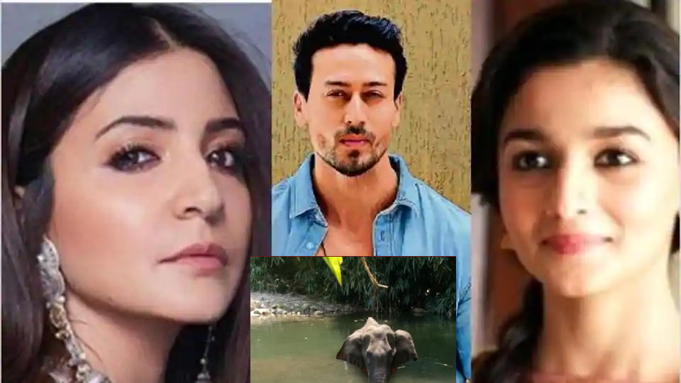 Photo of How B Town Reacted on the Death of Pregnant Elephant?